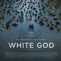 Açık Hava Sinema Open Air Cinema  1 Ağustos  20:45 | 1st August 20:45 ('Beyaz Tanrı' Tekrar 'White God' Repeat)